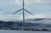 Windmills with Elk